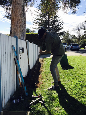 garden-maintenance-services-northern-beaches-ccandm-landscape-privacy-hedge